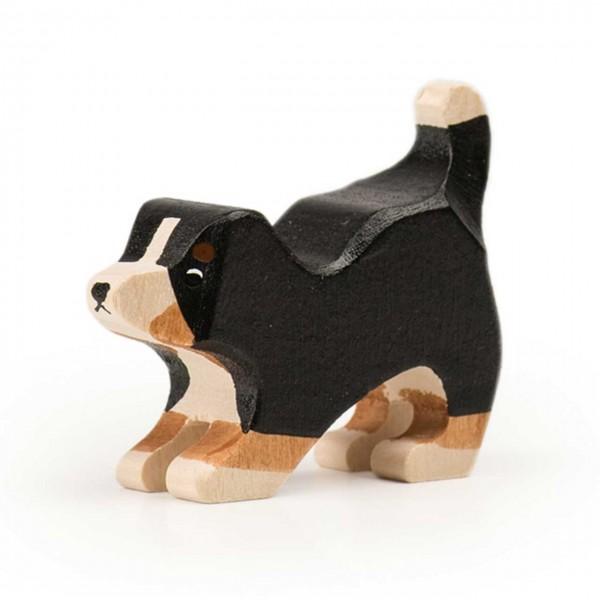 Trauffer Berner Sennenhund Welpe spielend
